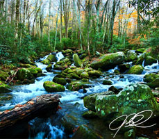 Smoky Mountains National Park photo taken in Moss Covered River Rocks and Rapids