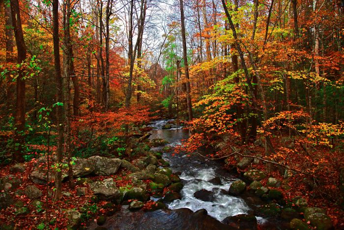 A creek runs through fall leaves and autumn colors in Smoky Mountains National Park.