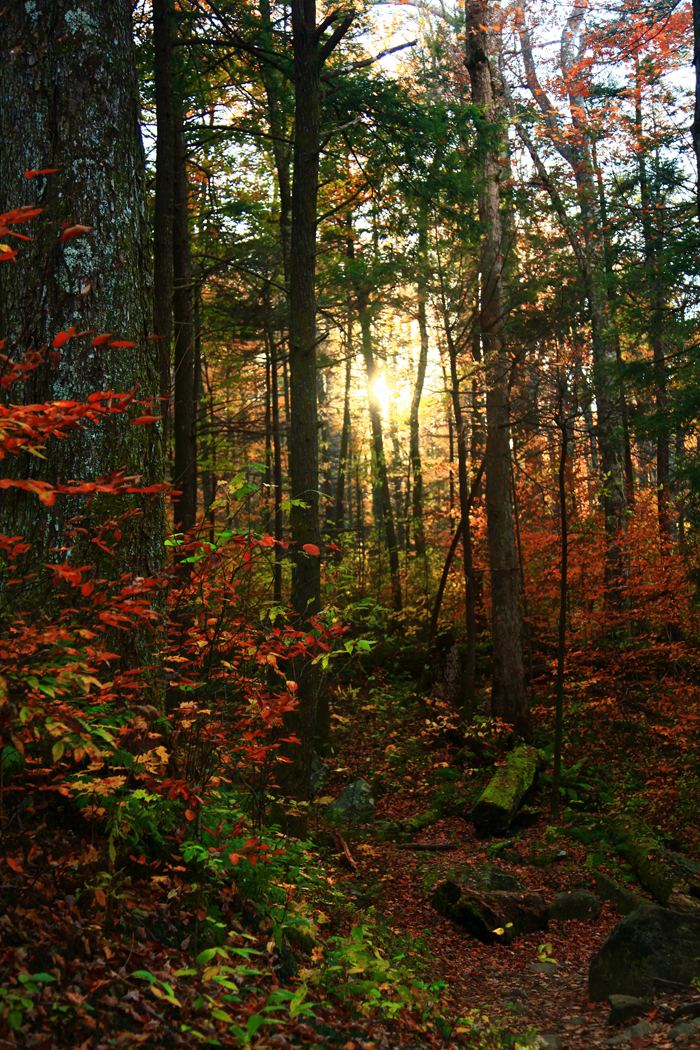 Sunset along the Grotto Falls trail in the Smoky Mountains National Park.