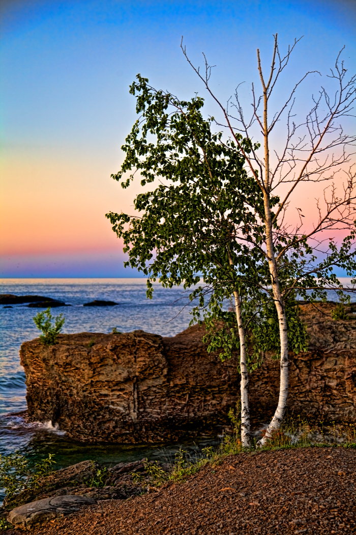Birch trees along the Lake Superior shore in Marquette, Michigan