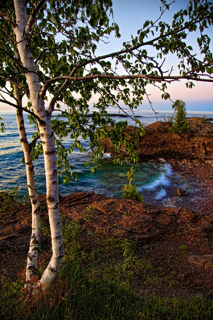 Birch trees along the Lake Superior shore in Marquette, Michigan